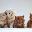 Katte COLOURBOX15649755